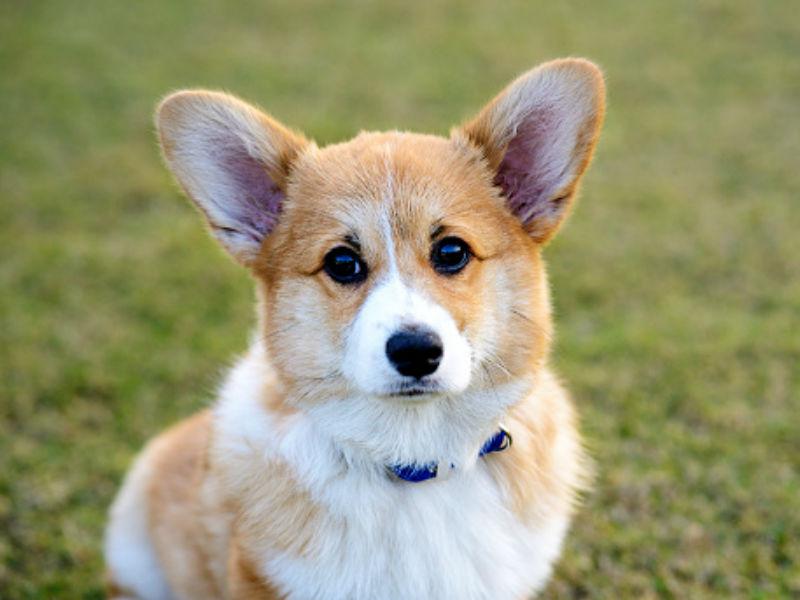disney dog names header
