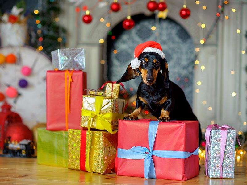 dog-gift1-header