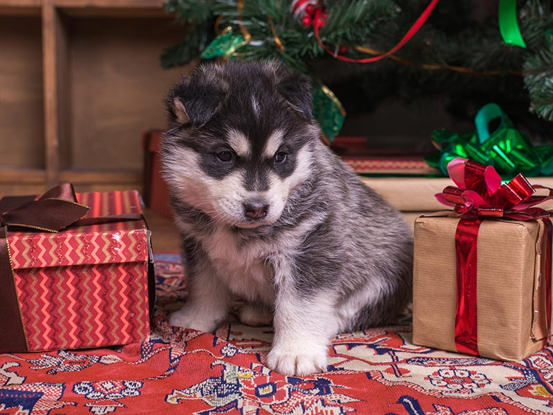 dog-gift2-header