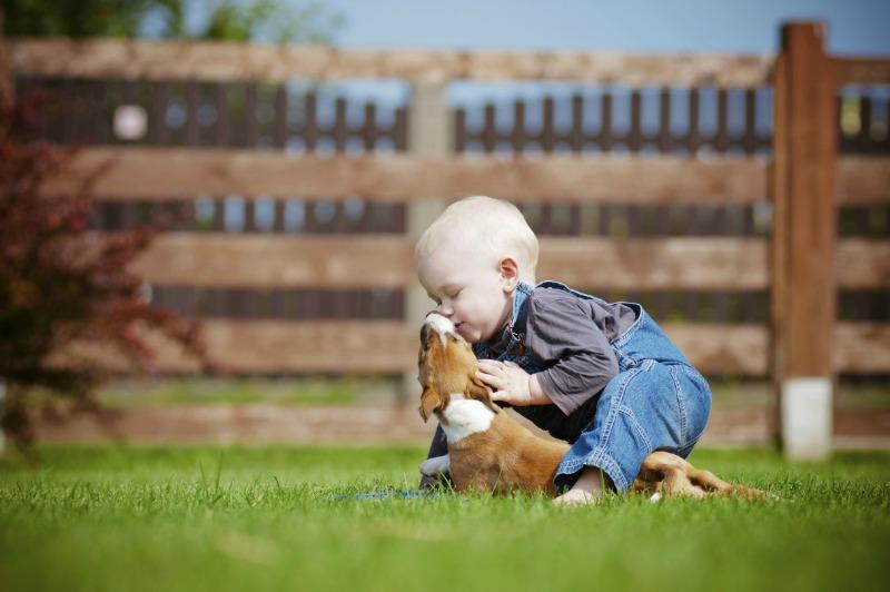 dog licking baby header