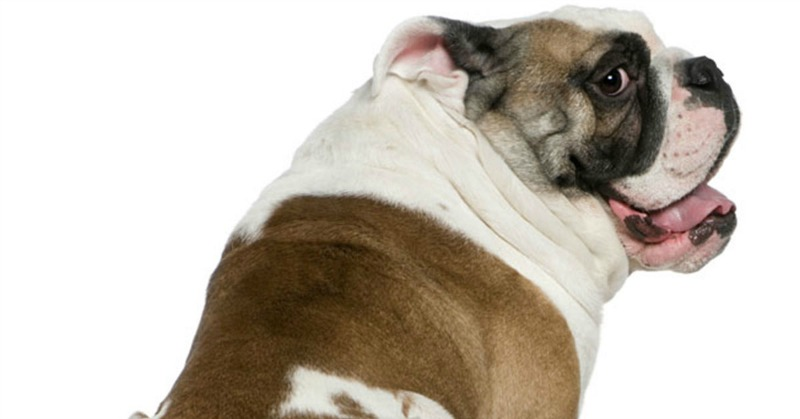 dog poop health header
