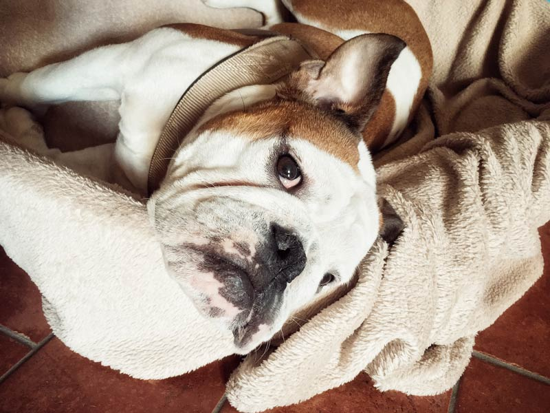 dog-remembers-hero.jpg