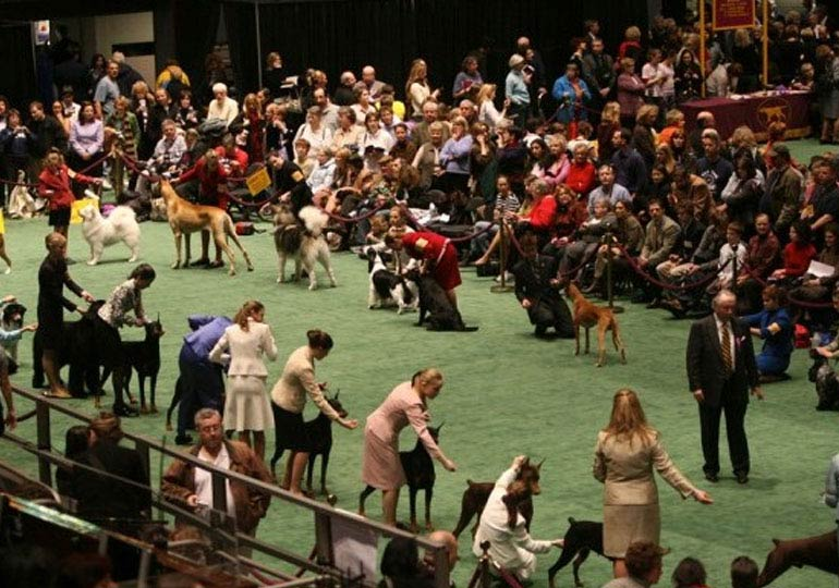 dog show questions