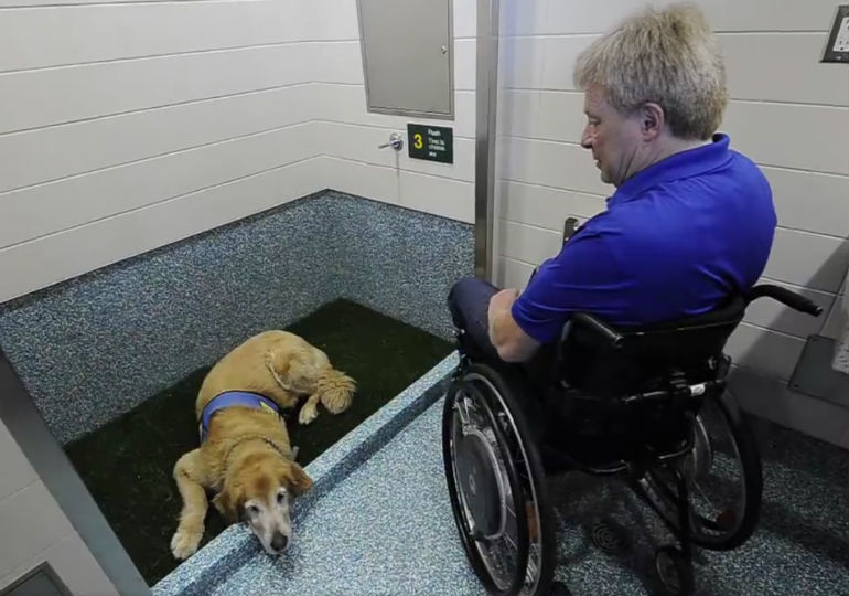 Airports Install Pet Bathrooms To Ease Dog Travel