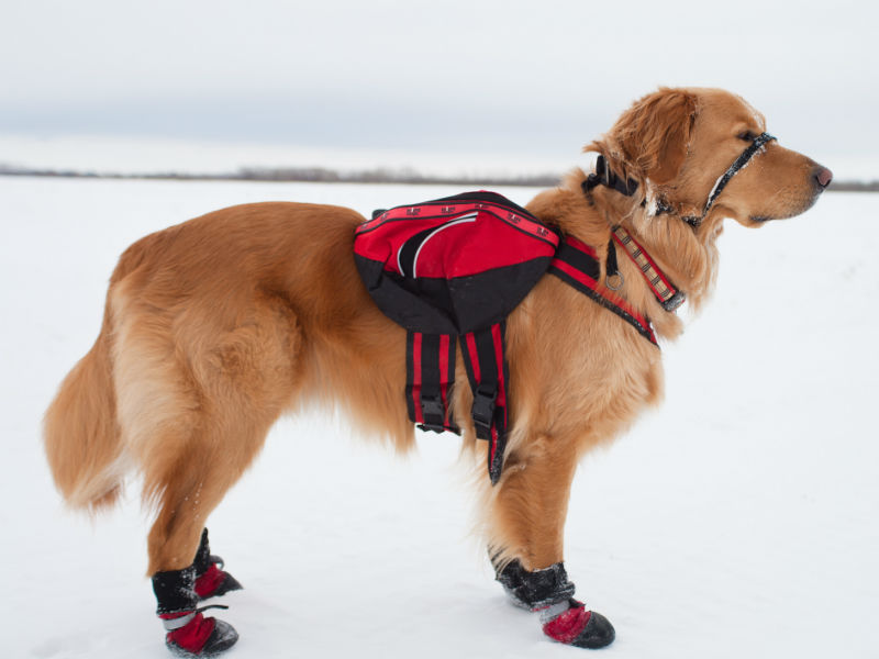 Top 10 Dog Boots For Winter Amp Cold Weather American