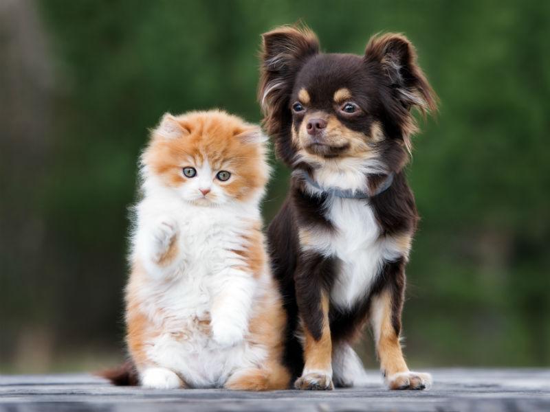 dog_cat_state_hero