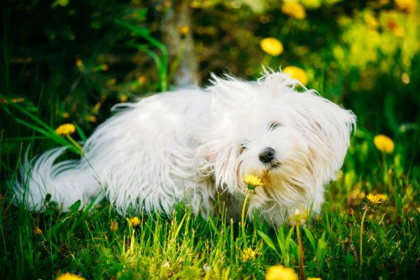 狗的过敏反应类型