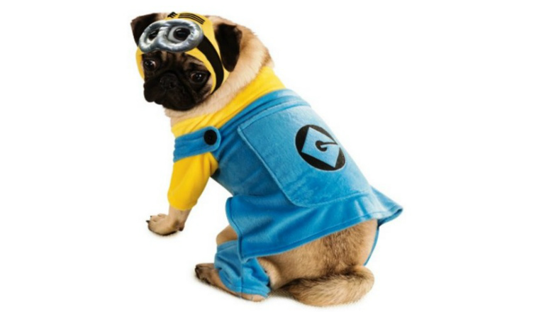 dog in minion costume header