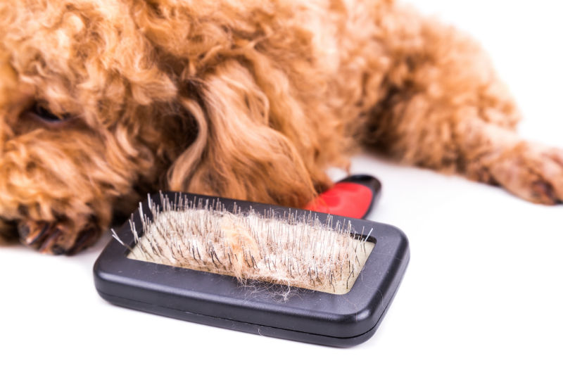 dog with brush