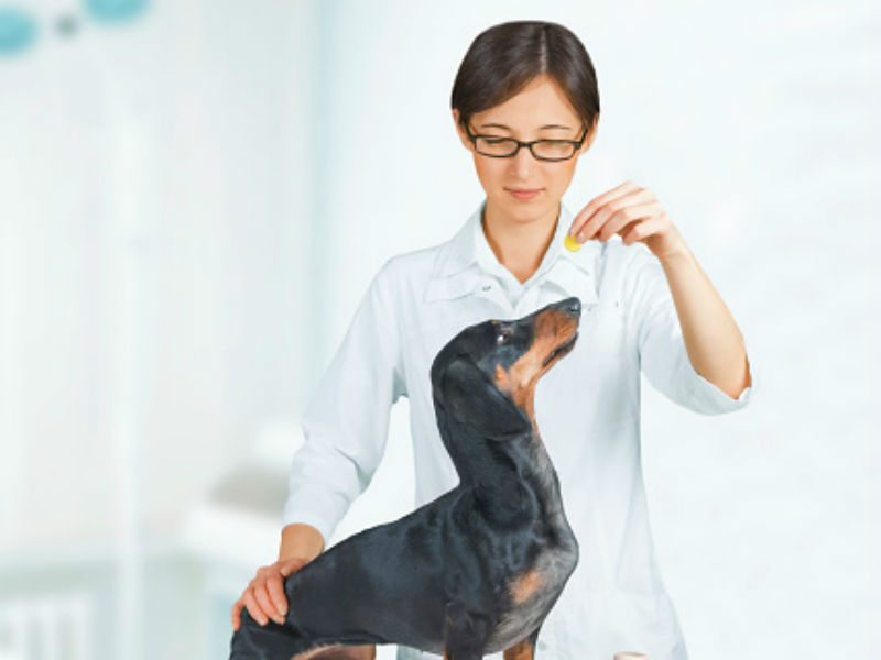 The Science Behind Pet Supplements