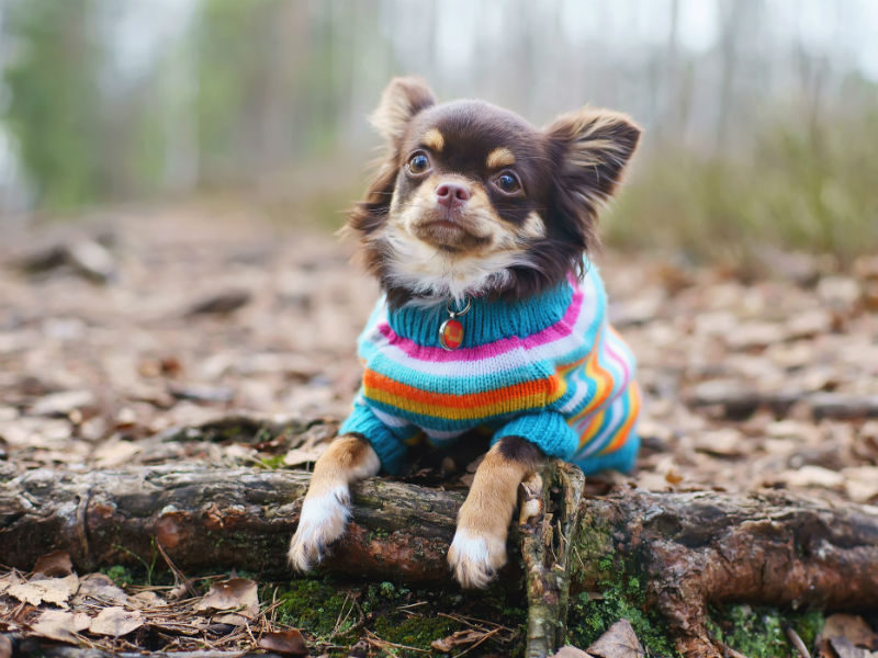 Dog Sweaters Check Out Some Options For Your Furry Friend