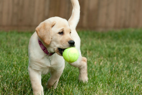 dog toys header
