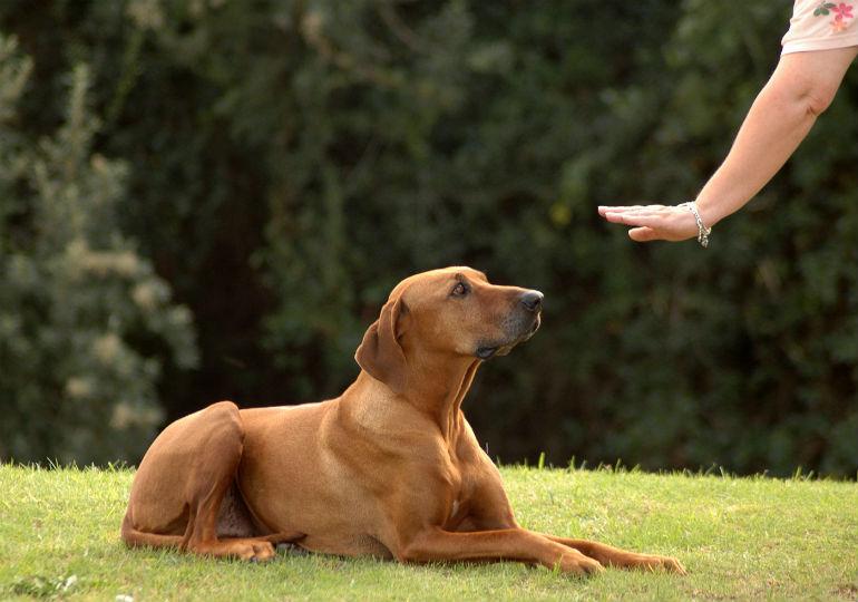 deaf dog training header