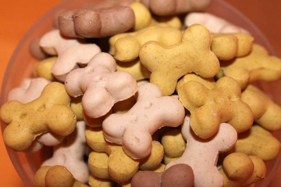dog treats header