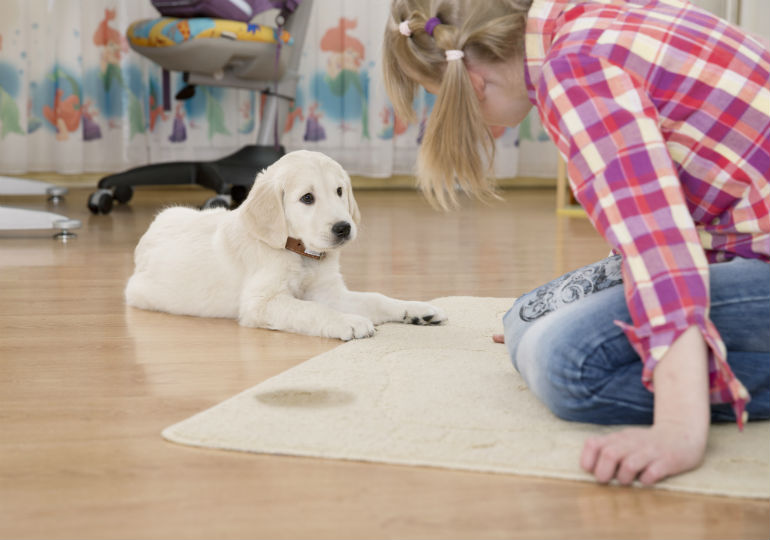 Uh Oh! My Dog Peed on the Floor! How to Get Rid of the Smell