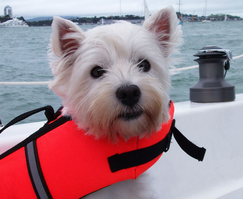 Dog Life Jacket Do Dogs Need Life Vests