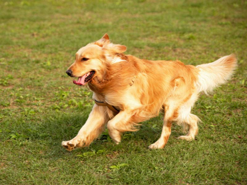 What to do if Your Dog Gets Off Leash