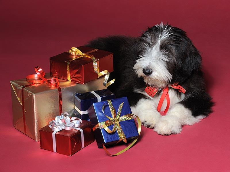 doglover-gifts-header