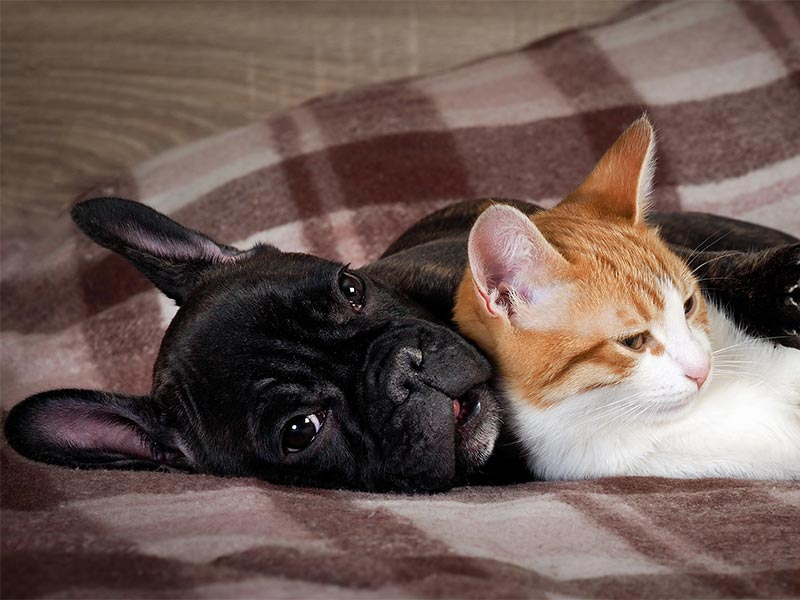 dogs-and-cats-header.jpg