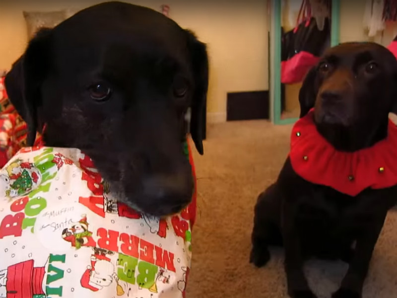 dogs opening presents header