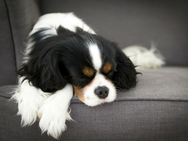 dreaming_dog_hero