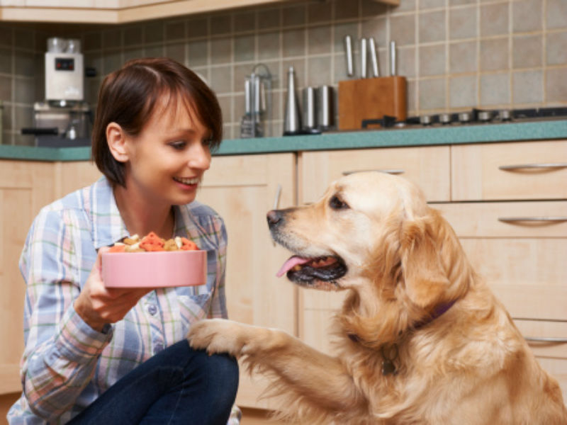 Nutrition How To Get Your Dog To Eat More Slowly