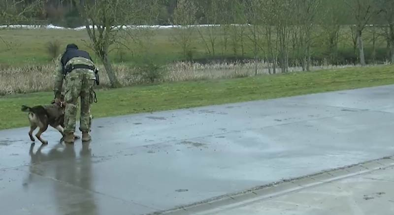 GSD in Army Training