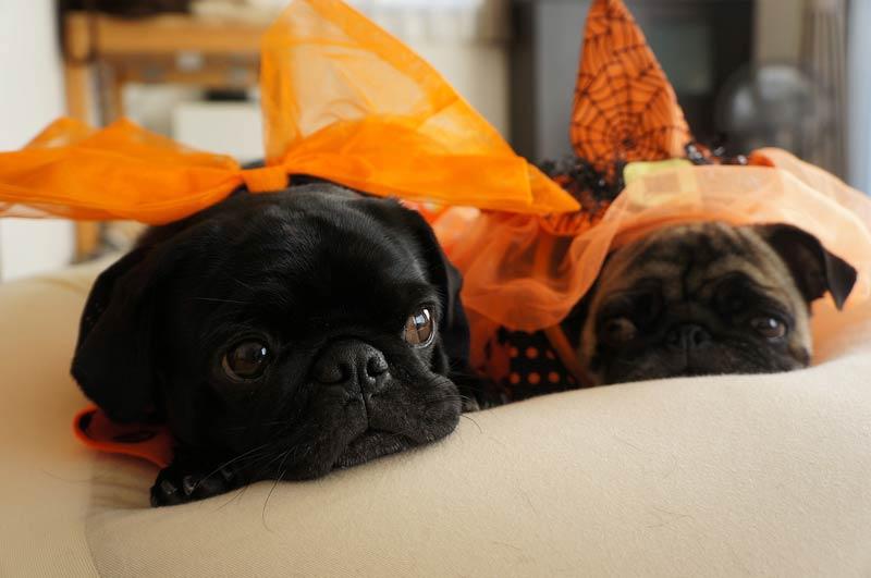 halloween precautions header