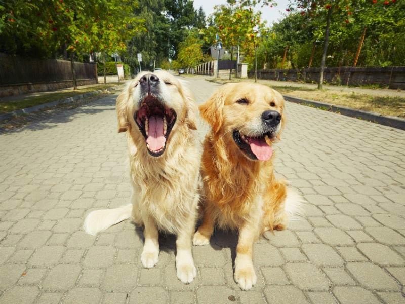 weekend dogs header