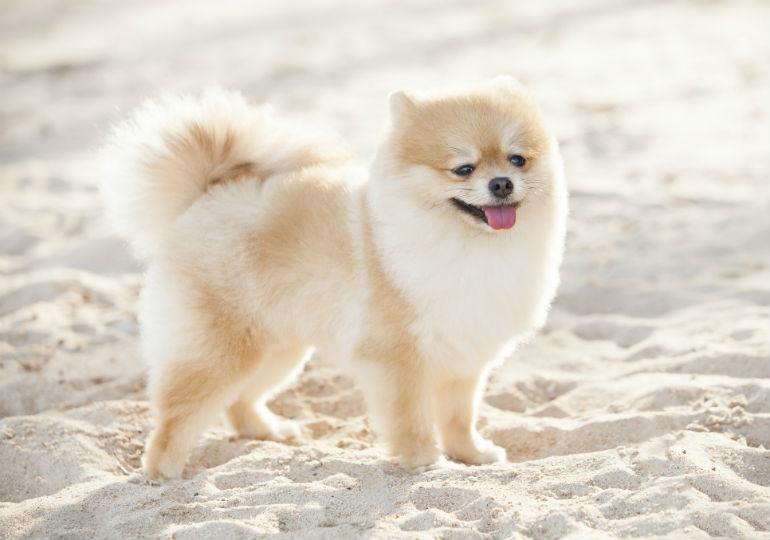 puppy coat header