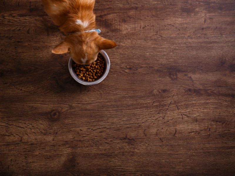Can Humans Eat Freshpet Food