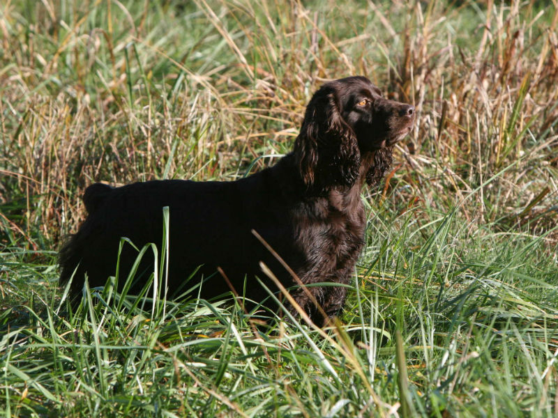 Hunting Dog Names Hero Having Trouble Deciding On A Name For Your