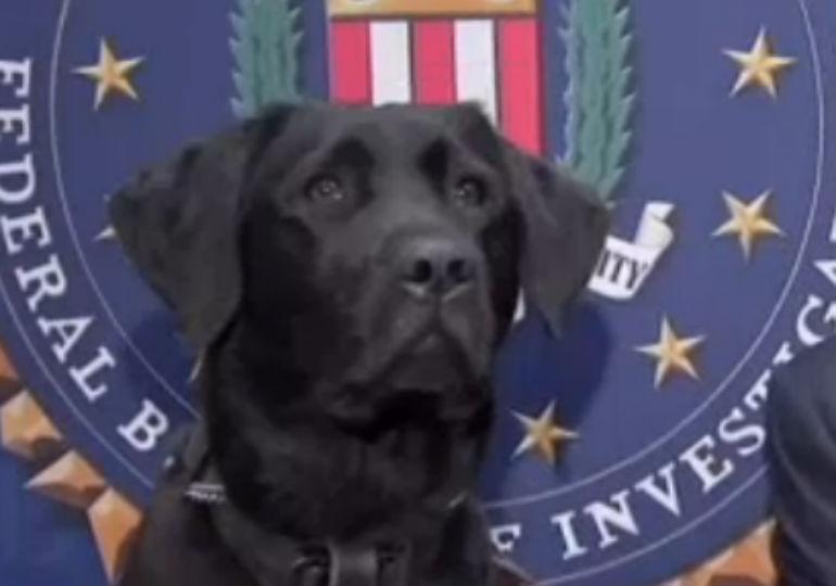 Meet The FBI's Newest Recruit: An Electronics-Sniffing K-9
