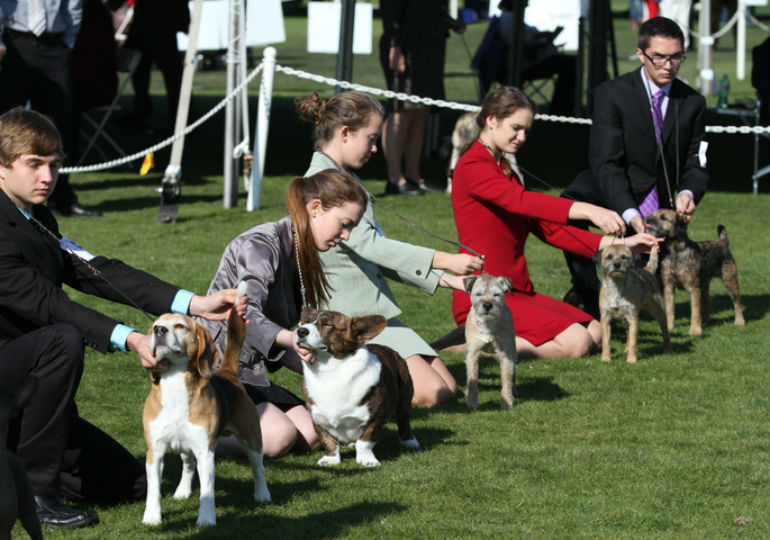 AKC Introduces Junior Showcase Events