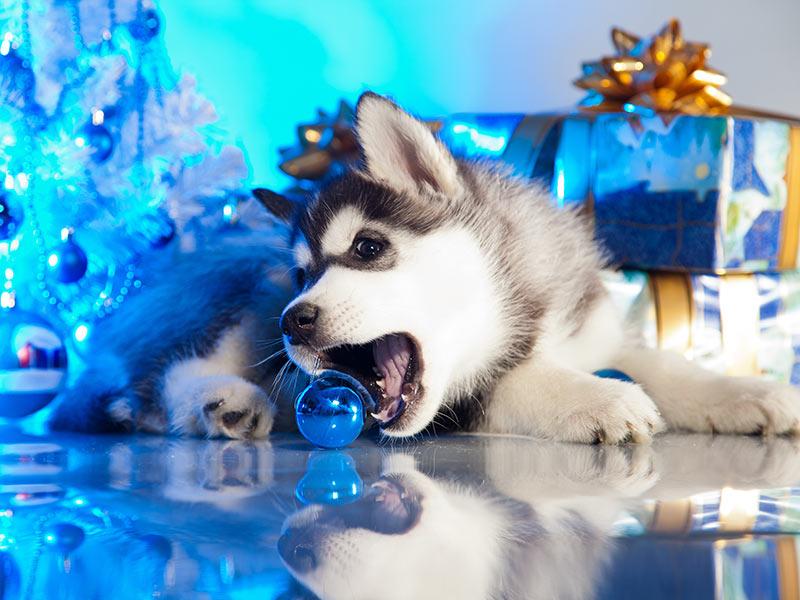 keep-puppy-safe-header