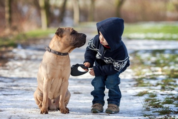 The Many Ways Kids Benefit From Having A Dog American