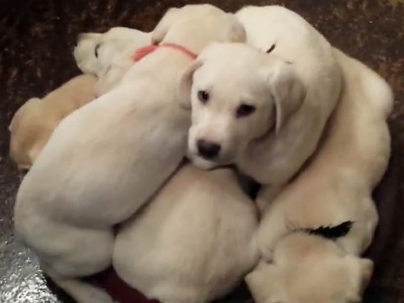 puppy pileup header
