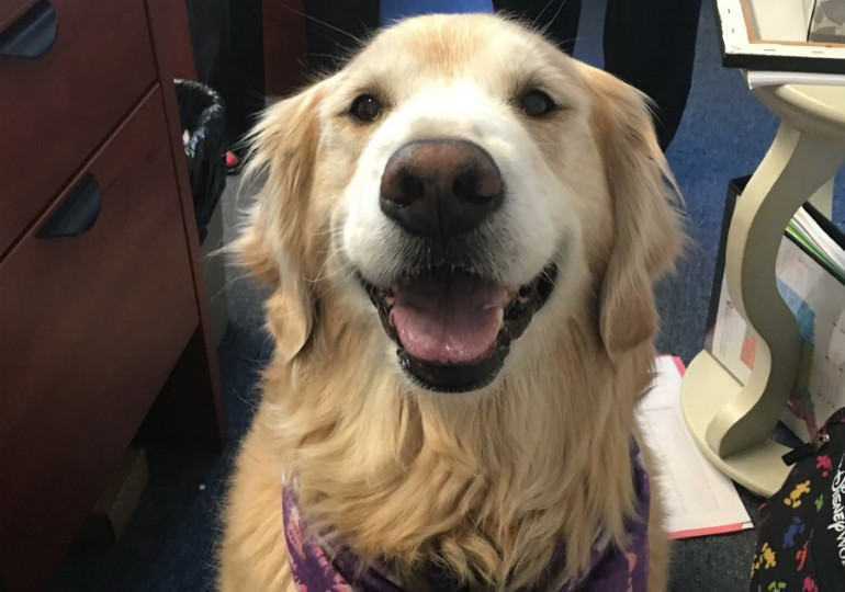 This Golden Retriever Is Making A Difference In The Lives of Sexual Assault Victims