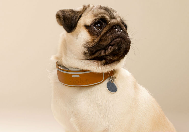 Introducing the LINK AKC™ Smart Collar: Taking the Bond Between Dog and Owner to New Levels
