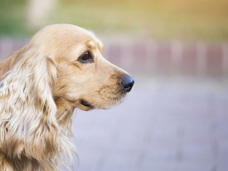Liver Cancer in Dogs: Symptoms, Diagnosis, and Treatment