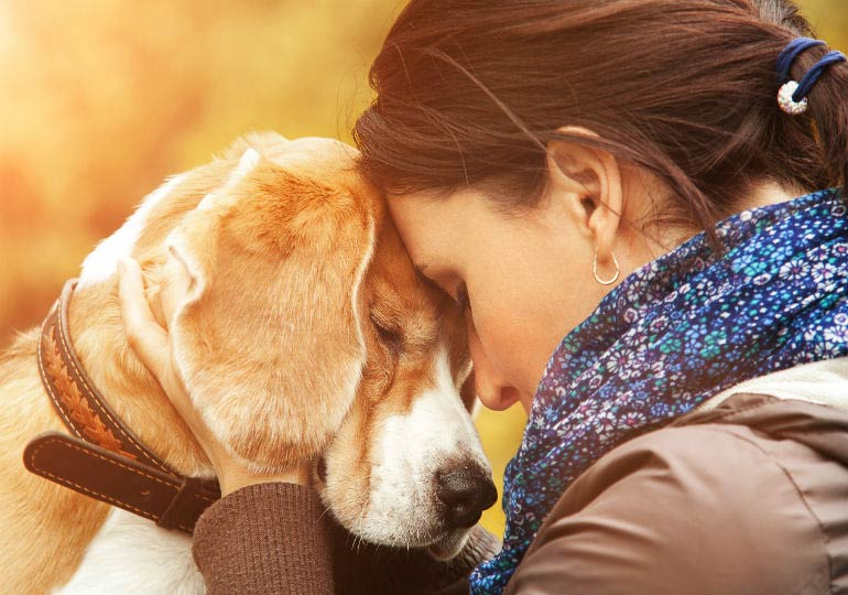11 Poignant Quotes About Losing A Dog American Kennel Club