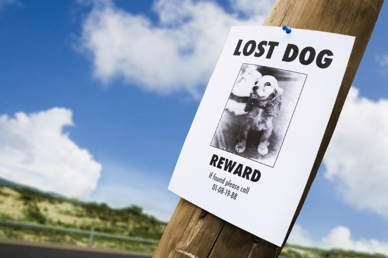 lost dog header
