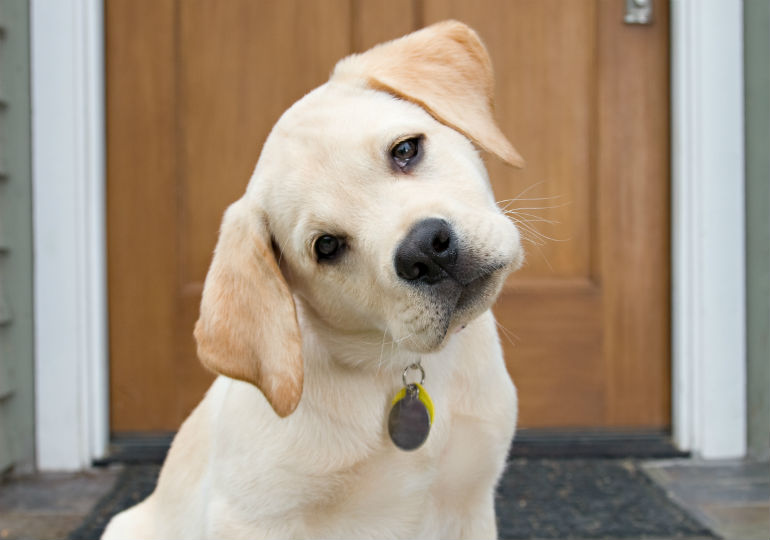 Dogs Pay Attention to Their Owners, and Remember What They Do, Study Shows