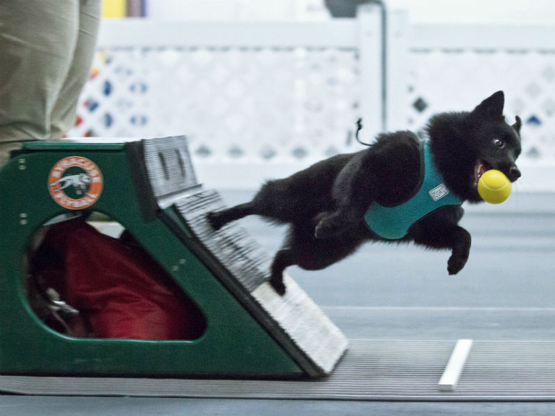 mobyflyball_header