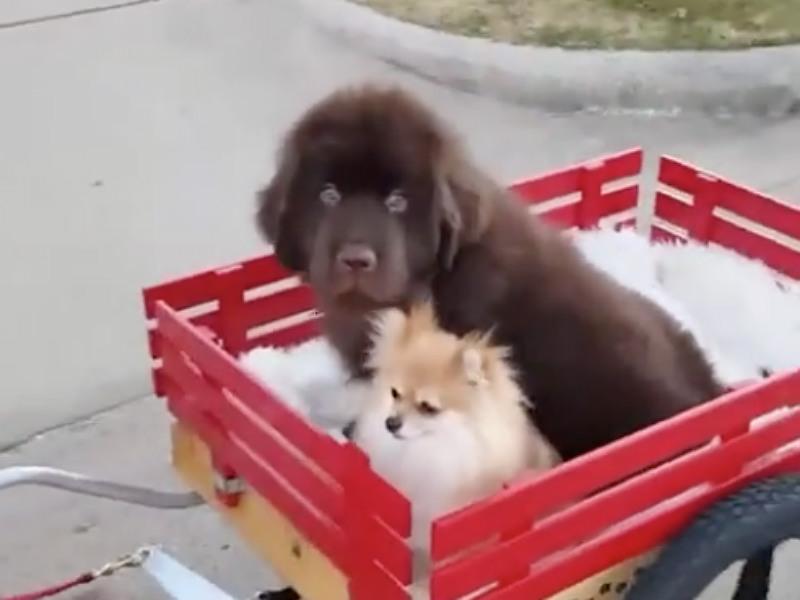 newfie_cart_hero
