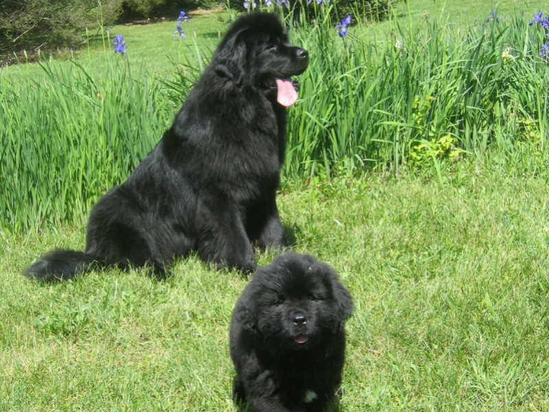 newfies header