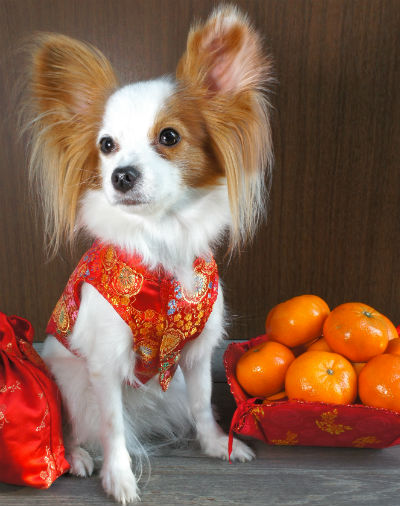 papillion and oranges