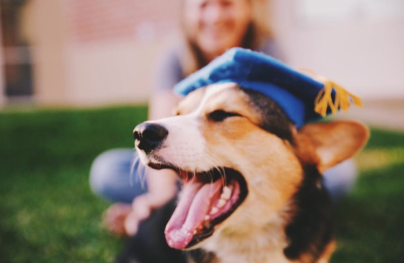 pavlov with grad cap