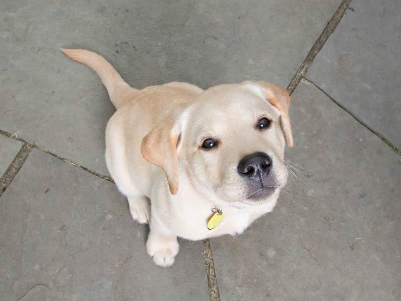 dog collars header