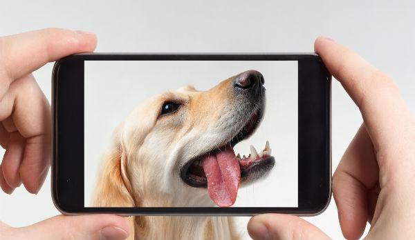 phone photo of dog